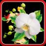Oрхидея Живые Обои